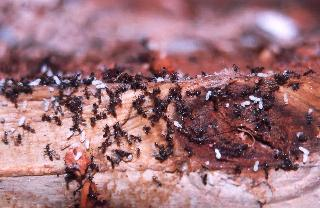 Advantage Pest Control - Photo 10
