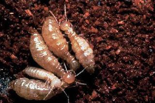 Advantage Pest Control - Photo 2