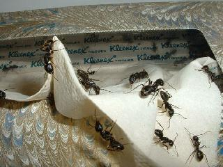 Advantage Pest Control - Photo 4