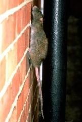 Advantage Pest Control - Photo 8