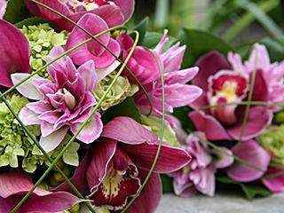 Fleurs ILLICO (Les) - Photo 3