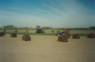 Brayford Sod Farms Inc - Photo 7