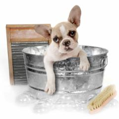 Mutkut Dog Grooming - Photo 10