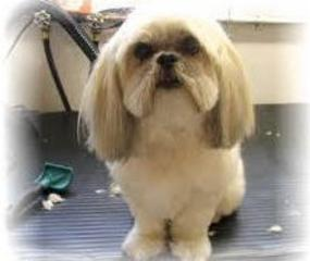 Mutkut Dog Grooming - Photo 7