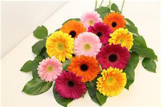 Posno Flowers - Photo 4