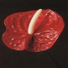 Fleuriste Maisonneuve - Photo 1