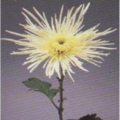 Fleuriste Maisonneuve - Photo 3