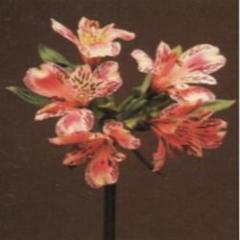 Fleuriste Maisonneuve - Photo 2