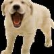 Ellerslie Pet Hospital - Veterinarians - 780-702-7738