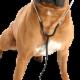 Ellerslie Pet Hospital Ltd - Veterinarians - 780-702-7738
