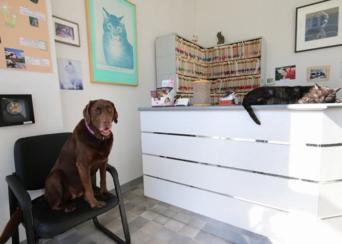Kitsilano Animal Clinic - Photo 2
