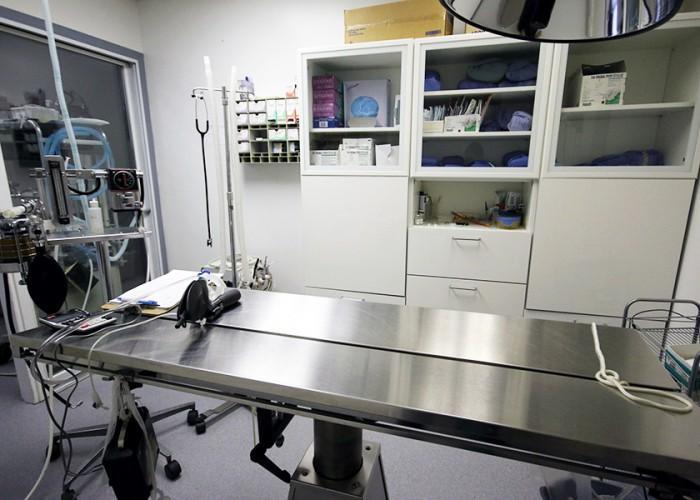 Kitsilano Animal Clinic - Photo 3