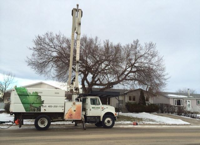Dandyman Tree Service - Photo 1