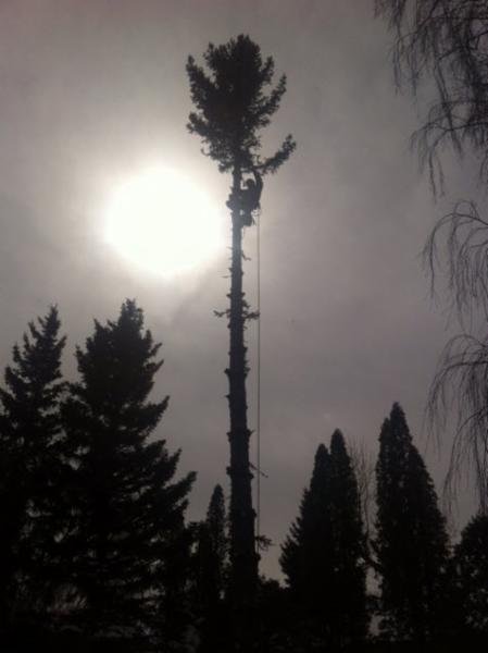 Dandyman Tree Service - Photo 2