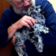 Wetaskiwin Animal Clinic - Pet Shops - 780-352-7006