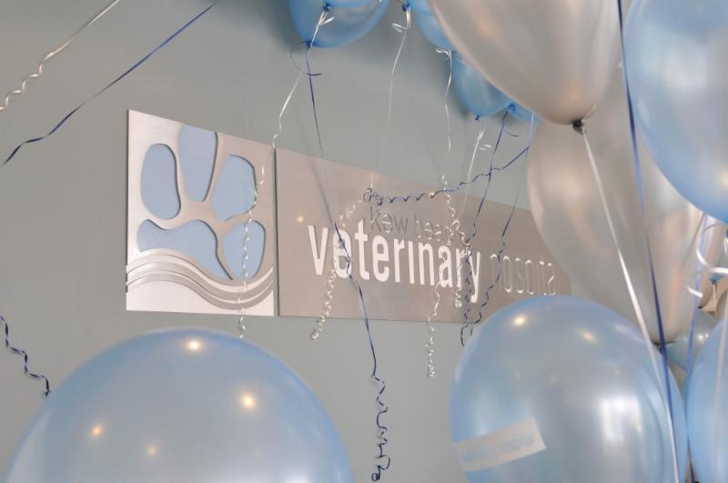 Kew Beach Veterinary Hospital - Photo 1