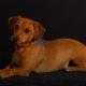 Big Dogs Photo Studio - Portrait & Wedding Photographers - 506-856-0031