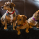 Big Dogs Photo Studio - Photographes de mariages et de portraits - 506-856-0031