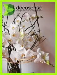Decosense Design Services & Floral Studio - Photo 4