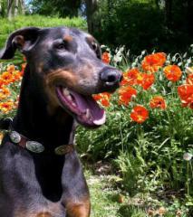 Dog on Leash - Photo 5