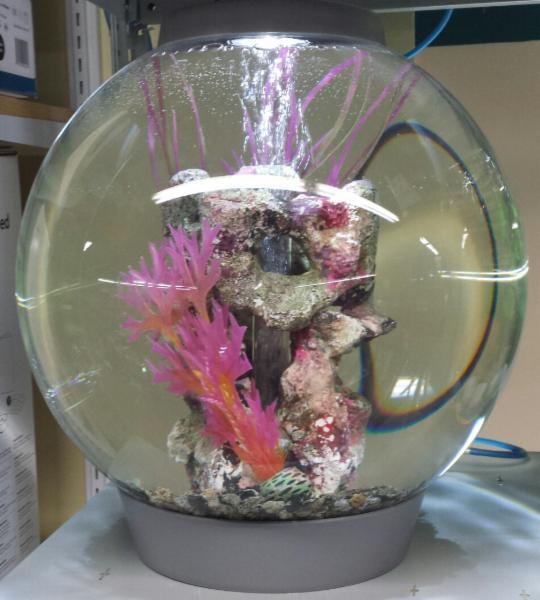 Animalerie Aquarium Drummond - Photo 2