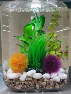 Animalerie Aquarium Drummond - Photo 1
