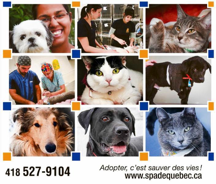 Société Protectrice des Animaux de Québec - Photo 1