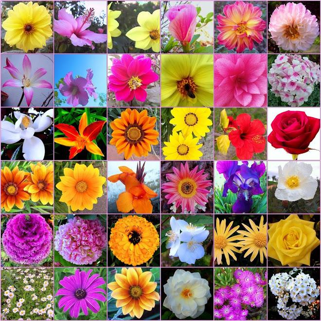 Jardin Des Fleurs Enr - Photo 8