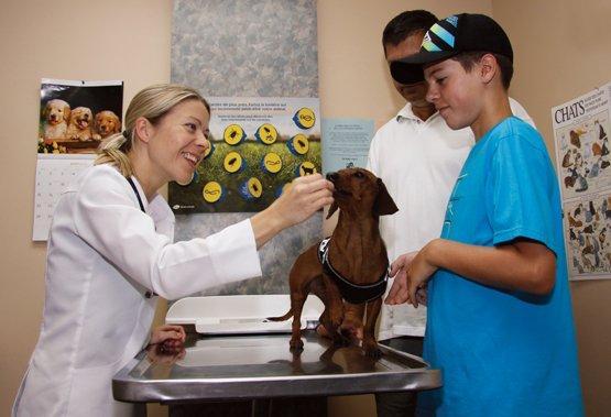 Clinique Vétérinaire Lachapelle - Photo 3