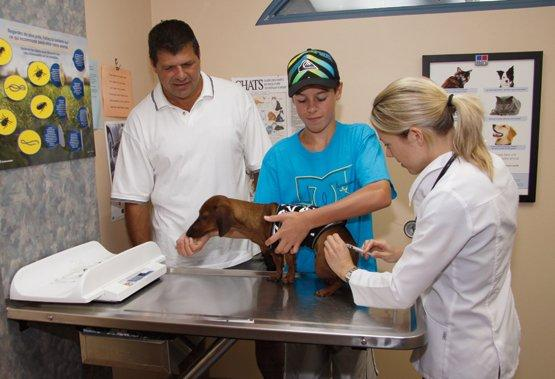 Clinique Vétérinaire Lachapelle - Photo 2