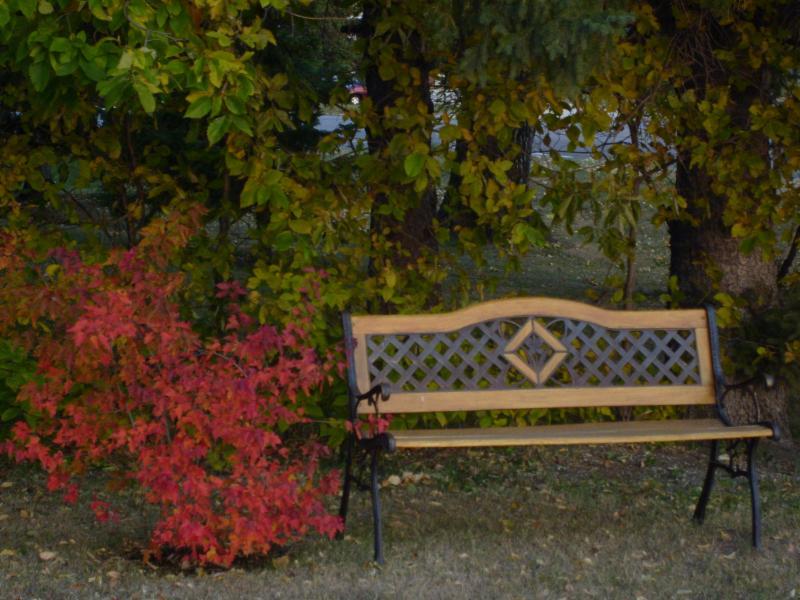 Maple Leaf Motel - Photo 10