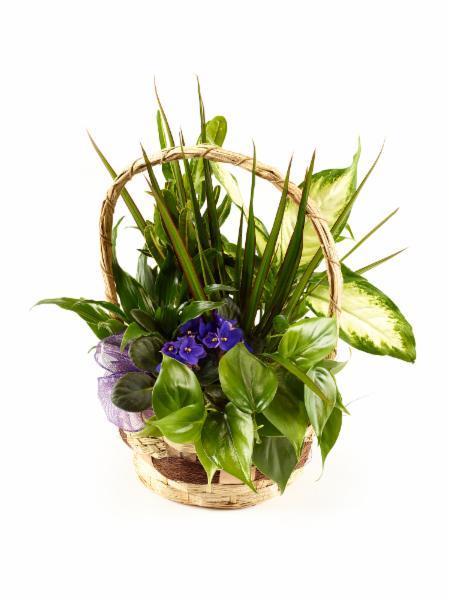 Brant Florist - Photo 6