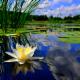 Laurie By The Pond - Hypnosis & Hypnotherapy - 519-503-3146