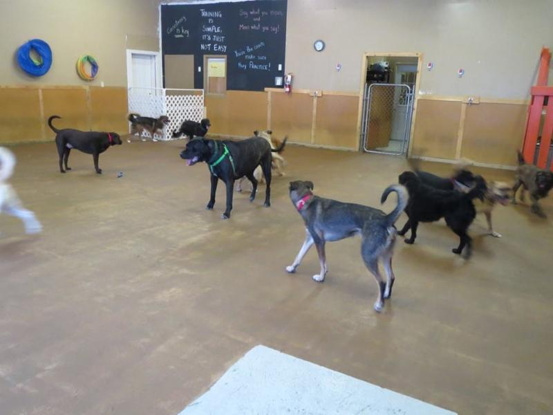 Canada's Canine Academy - Photo 2