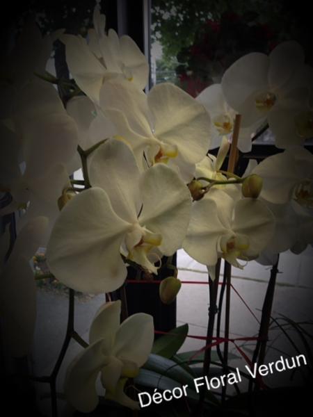 Décor Floral - Photo 11