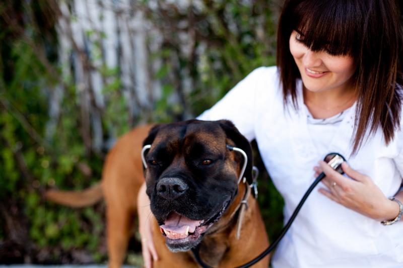 Soins vétérinaires de chiens