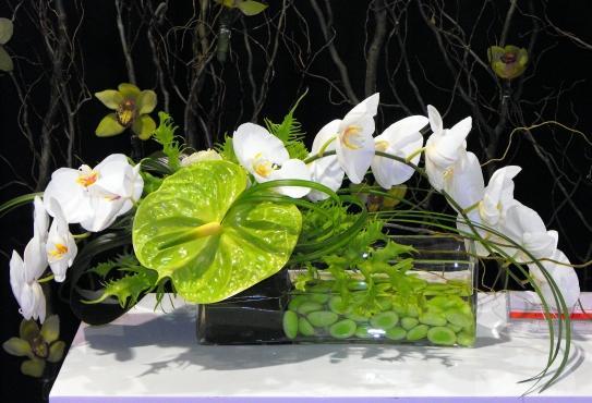 Floralies Jouvence Inc - Photo 1