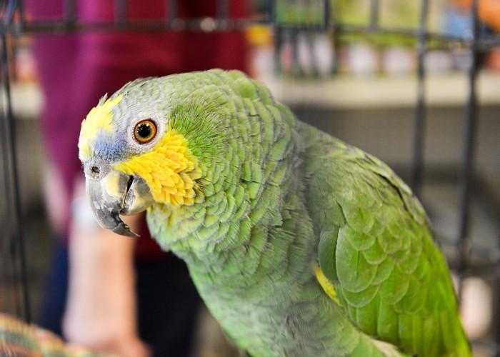 Mister Pet - Photo 3