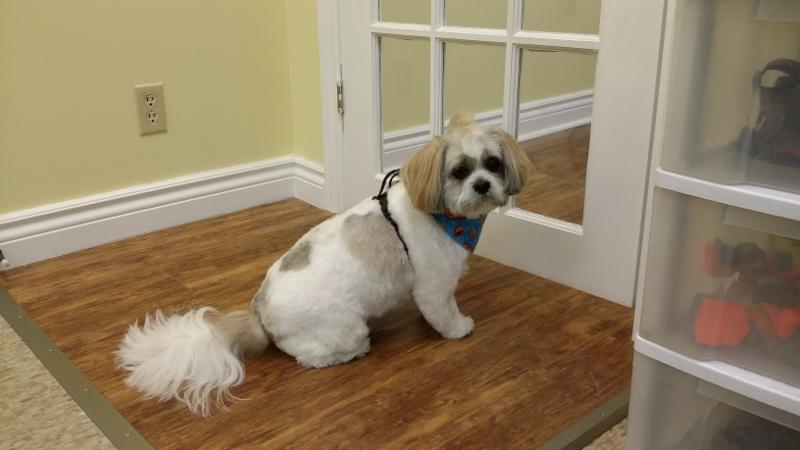 Maddie S Dog Grooming Stouffville