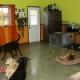 Complexe Canin Le Cajoleur - Garderie d'animaux de compagnie - 418-832-1255