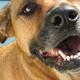 Port Royal Animal Hospital Ltd - Veterinarians - 902-532-7387