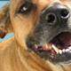 Port Royal Animal Hospital Ltd - Vétérinaires - 902-532-7387