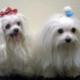 The Bark & Barber - Services pour animaux de compagnie - 905-893-3647