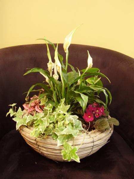 Trillium Floral Designs Inc - Photo 6