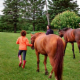 Willow Creek Horsemanship Center - Horse Riding Centres - 613-899-2238
