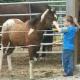 Willow Creek Horsemanship Center - Centres équestres - 613-899-2238