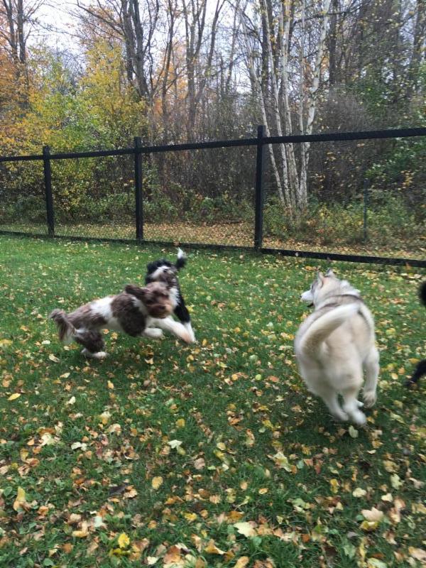 Nous aimons quand les chiens s'amusent.