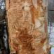 Antidote Arboriculture - Tree Service - 514-557-2983