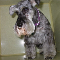 Barrie Poodle Salon - Pet Grooming, Clipping, & Washing - 705-726-4744