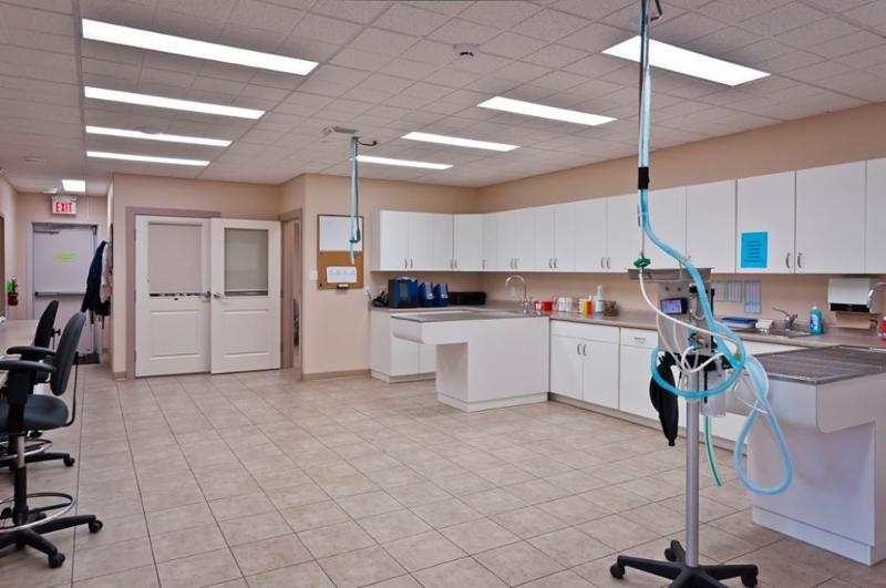 All of the dental procedures are performed at our easy to clean stainless steel sink station. These stations are also used for minor procedures. - Warman Veterinary Clinic